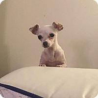 Adopt A Pet :: bambi - Mount Hope, ON
