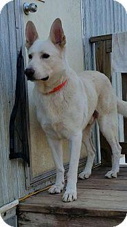 German Shepherd Dog Mix Dog for adoption in Buchanan Dam, Texas - Saint