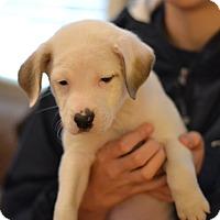 Adopt A Pet :: Cotton - Fabric Litter - Acworth, GA