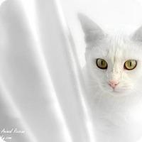 Adopt A Pet :: Ava - Florence, KY