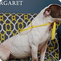 Adopt A Pet :: Margaret - Bucyrus, OH