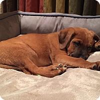Adopt A Pet :: Cassie - Nyack, NY