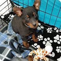 Adopt A Pet :: Lil Bit - Rosamond, CA