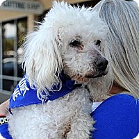 Adopt A Pet :: Peaches - Santa Barbara, CA