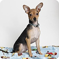 Adopt A Pet :: Pancho - Oakland, CA