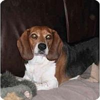 Adopt A Pet :: Judson - Portland, OR