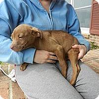 Adopt A Pet :: Cindy - South Jersey, NJ