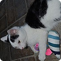 Adopt A Pet :: Riley - Xenia, OH