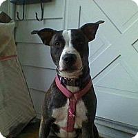 Adopt A Pet :: Jasmine - Clay, NY