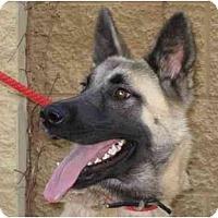 Adopt A Pet :: Hadyn - Conyers, GA