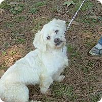 Adopt A Pet :: Merlin - North Little Rock, AR