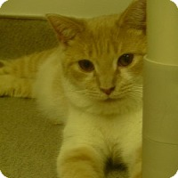 Adopt A Pet :: Dillion - Hamburg, NY