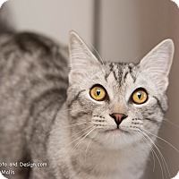 Adopt A Pet :: Kenny - Fountain Hills, AZ