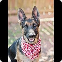 Adopt A Pet :: Inka - Houston, TX