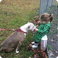 Adopt A Pet :: Cupid - Bloomfield, CT