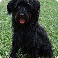 Adopt A Pet :: Maggie - Courtesy Posting - Oakhurst, NJ