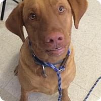 Adopt A Pet :: Cooper - Bradenton, FL