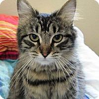 Adopt A Pet :: Susie Q - Orange, CA