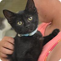 Adopt A Pet :: April - Ogden, UT