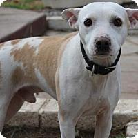 Adopt A Pet :: Mushu - Studio City, CA