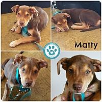 Adopt A Pet :: Matty - Kimberton, PA