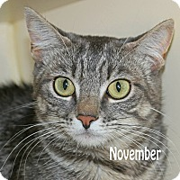 Adopt A Pet :: November - Idaho Falls, ID