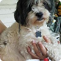 Adopt A Pet :: Sharley - Medora, IN