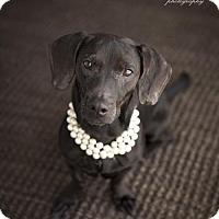 Adopt A Pet :: Bettye Lou - McKinney, TX
