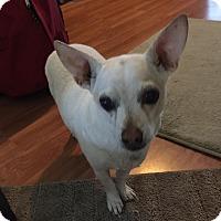 Adopt A Pet :: Tippy - Jacksonville, FL