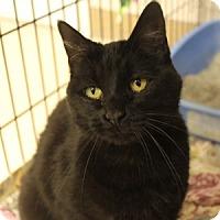 Adopt A Pet :: Binx - Naperville, IL