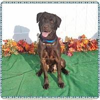 Adopt A Pet :: HERSHEY - Marietta, GA