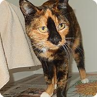 Adopt A Pet :: Joanna - Newport, NC