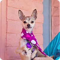 Adopt A Pet :: *Twinkle Holiday - Pittsburg, CA