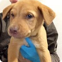 Adopt A Pet :: Mistletoe - Pleasanton, CA