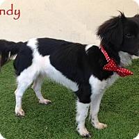 Adopt A Pet :: Wendy - San Diego, CA