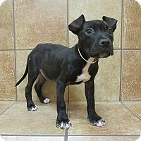 Adopt A Pet :: Bob *Petsmart GB* - Appleton, WI