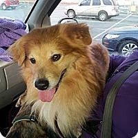 Adopt A Pet :: Coco - Puyallup, WA