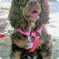 Adopt A Pet :: Coco - Sugarland, TX