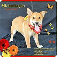 Adopt A Pet :: Michaelangelo - Plano, TX