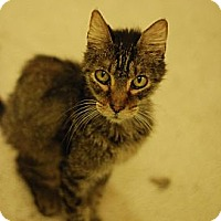 Adopt A Pet :: Earl - St. Louis, MO