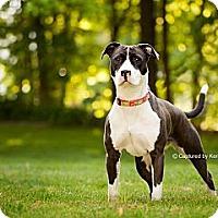 Adopt A Pet :: Diva - Medina, OH