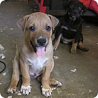 Adopt A Pet :: Mason (adoption pending) - Phoenix, AZ