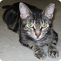 Adopt A Pet :: Tiger - Delray Beach, FL