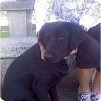 Adopt A Pet :: ASHLEY - La Mesa, CA