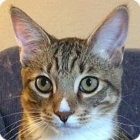 Adopt A Pet :: Chip - Winchester, CA