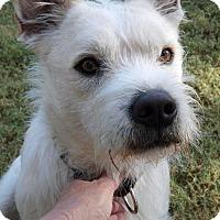 Adopt A Pet :: Charles Oakley - Scottsdale, AZ