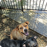 Adopt A Pet :: Sasha - Perris, CA