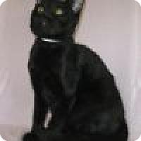Adopt A Pet :: Reuben - Powell, OH