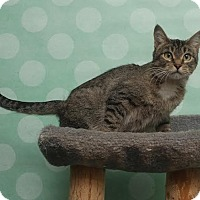 Adopt A Pet :: Ferona - Chippewa Falls, WI