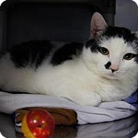 Adopt A Pet :: Muncie - New Milford, CT